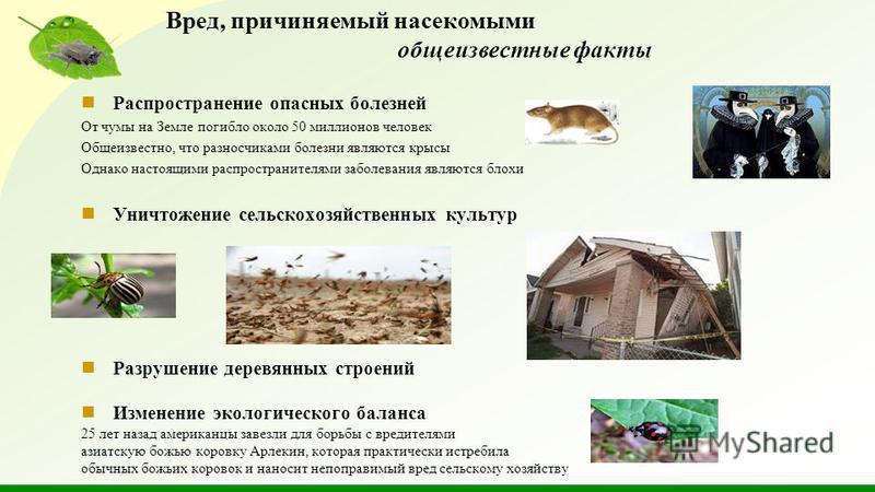 Распространение опасных болезней От чумы на Земле погибло около 50 миллионов человек Общеизвестно, что разносчиками болезни являются крысы Однако настоящими распространителями заболевания являются блохи Уничтожение сельскохозяйственных культур Разруш