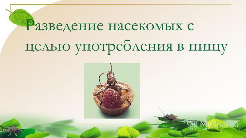 Разведение насекомых с целью употребления в пищу