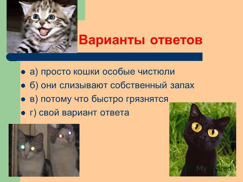 а) просто кошки особые чистюли б) они слизывают собственный запах в) потому что быстро грязнятся г) свой вариант ответа Варианты ответов