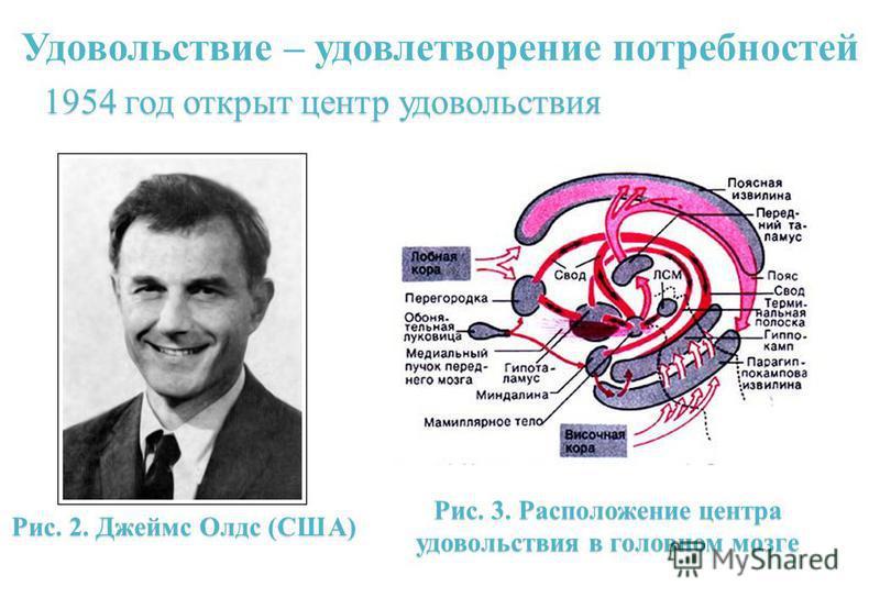 Удовольствие – удовлетворение потребностей Рис. 2. Джеймс Олдс (США) 1954 год открыт центр удовольствия Рис. 3. Расположение центра удовольствия в головном мозге