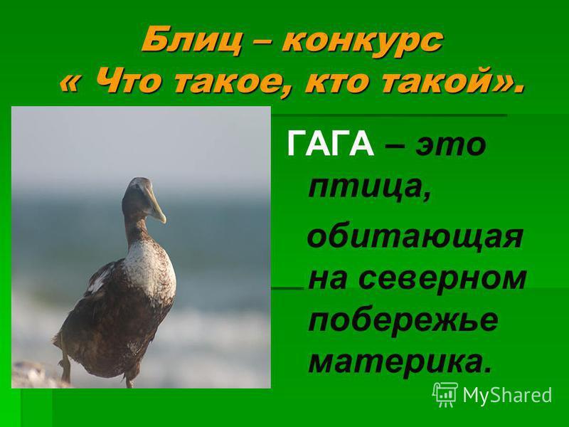 ГАГА – это птица, обитающая на северном побережье материка.