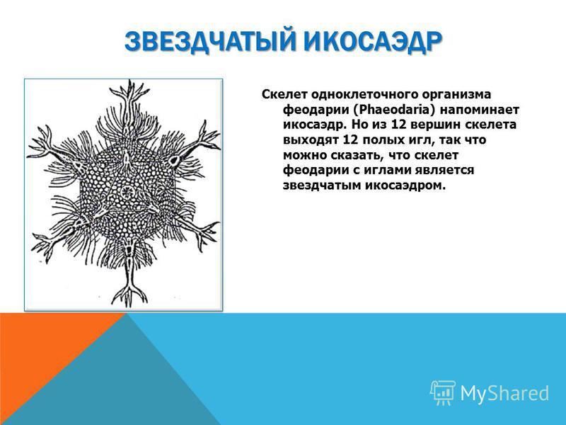 Скелет одноклеточного организма феодарии (Phaeodaria) напоминает икосаэдр. Но из 12 вершин скелета выходят 12 полых игл, так что можно сказать, что скелет феодарии с иглами является звездчатым икосаэдром. ЗВЕЗДЧАТЫЙ ИКОСАЭДР