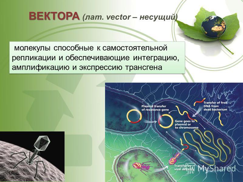 ВЕКТОРА ВЕКТОРА (лат. vector – несущий) молекулы способные к самостоятельной репликации и обеспечивающие интеграцию, амплификацию и экспрессию трансгена