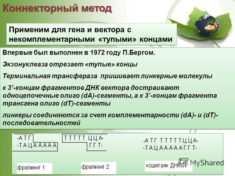 Применим для гена и вектора с некомплементарными «тупыми» концами Коннекторный метод Впервые был выполнен в 1972 году П.Бергом. Экзонуклеаза отрезает «тупые» концы Терминальная трансфераза пришивает линкерные молекулы к 3-концам фрагментов ДНК вектор