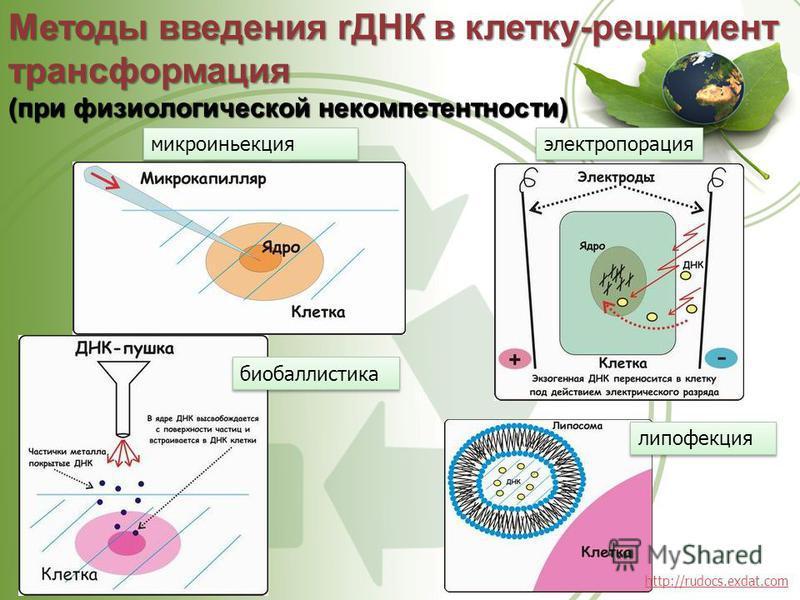 Методы введения rДНК в клетку-реципиент трансформация (при физиологической некомпетентности) микроиньекция электропорация липофекция биобаллистика http://rudocs.exdat.com