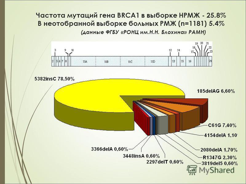 Частота мутаций гена BRCA1 в выборке НРМЖ - 25.8% В неотобранной выборке больных PМЖ (n=1181) 5.4% (данные ФГБУ «РОНЦ им.Н.Н. Блохина» РАМН)