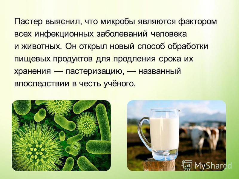 Пастер выяснил, что микробы являются фактором всех инфекционных заболеваний человека и животных. Он открыл новый способ обработки пищевых продуктов для продления срока их хранения пастеризацию, названный впоследствии в честь учёного.