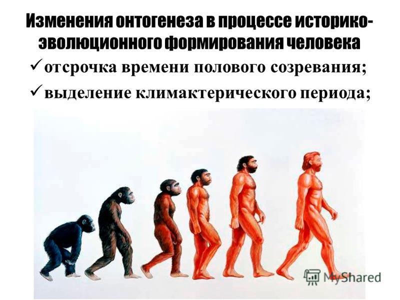 отсрочка времени полового созревания; выделение климактерического периода; Изменения онтогенеза в процессе историко- эволюционного формирования человека