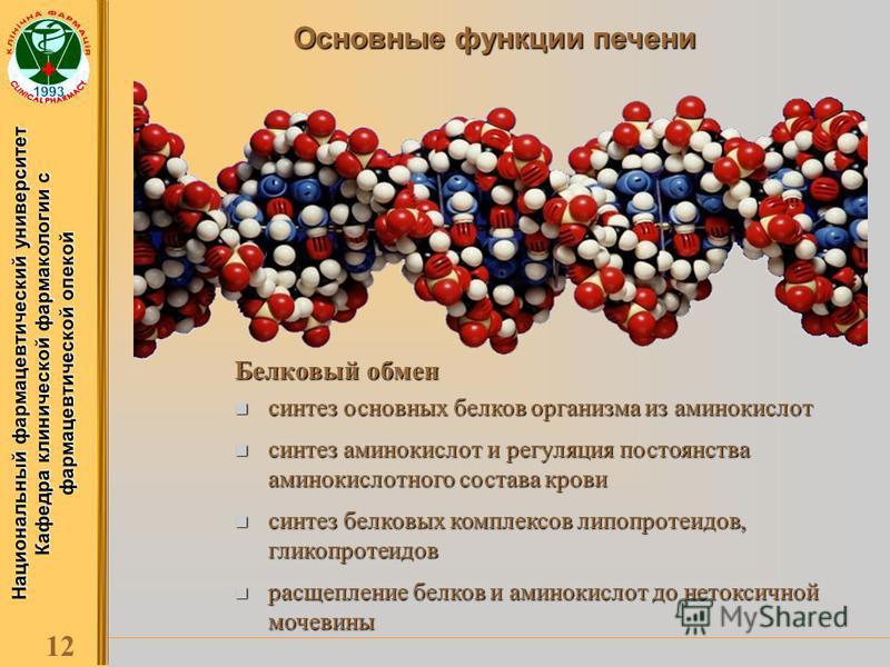 Национальный фармацевтический университет Кафедра клинической фармакологии с фармацевтической опекой 12 Основные функции печени Белковый обмен синтез основных белков организма из аминокислот синтез основных белков организма из аминокислот синтез амин