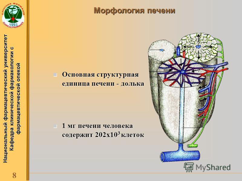 Национальный фармацевтический университет Кафедра клинической фармакологии с фармацевтической опекой 8 Морфология печени Основная структурная единица печени - долька Основная структурная единица печени - долька 1 мг печени человека содержит 202 х 10