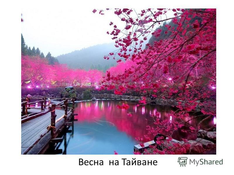 Весна на Тайване