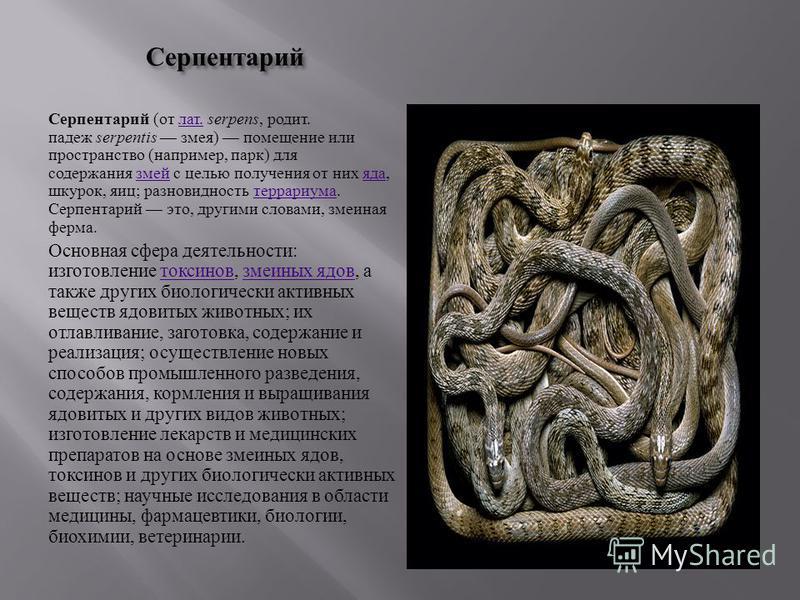 Серпентарий Серпентарий ( от лат. serpens, родит. падеж serpentis змея ) помещение или пространство ( например, парк ) для содержания змей с целью получения от них яда, шкурок, яиц ; разновидность террариума. Серпентарий это, другими словами, змеиная