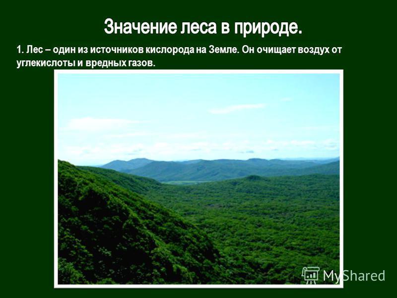 1. Лес – один из источников кислорода на Земле. Он очищает воздух от углекислоты и вредных газов.