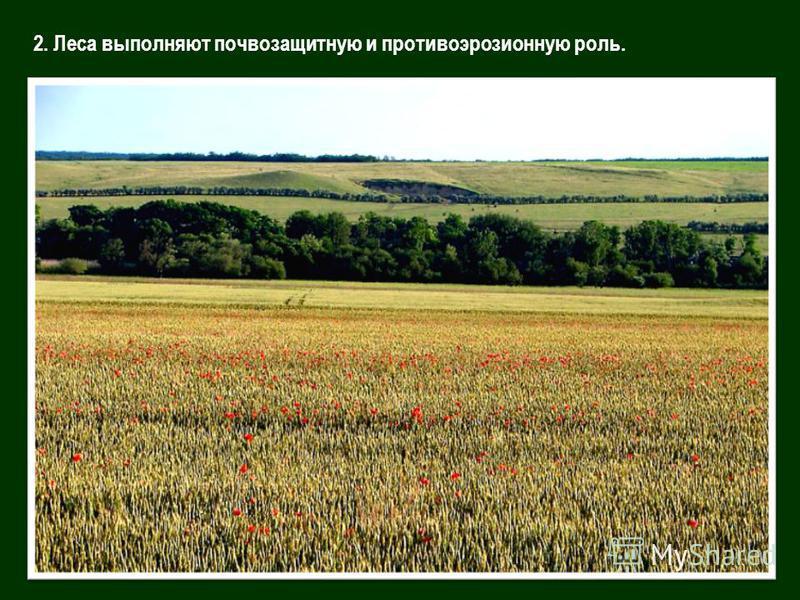2. Леса выполняют почвозащитную и противоэрозионную роль.