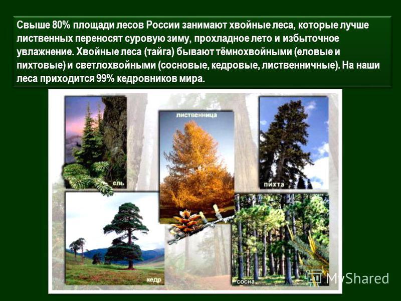 Свыше 80% площади лесов России занимают хвойные леса, которые лучше лиственных переносят суровую зиму, прохладное лето и избыточное увлажнение. Хвойные леса (тайга) бывают тёмнохвойными (еловые и пихтовые) и светлохвойными (сосновые, кедровые, листве