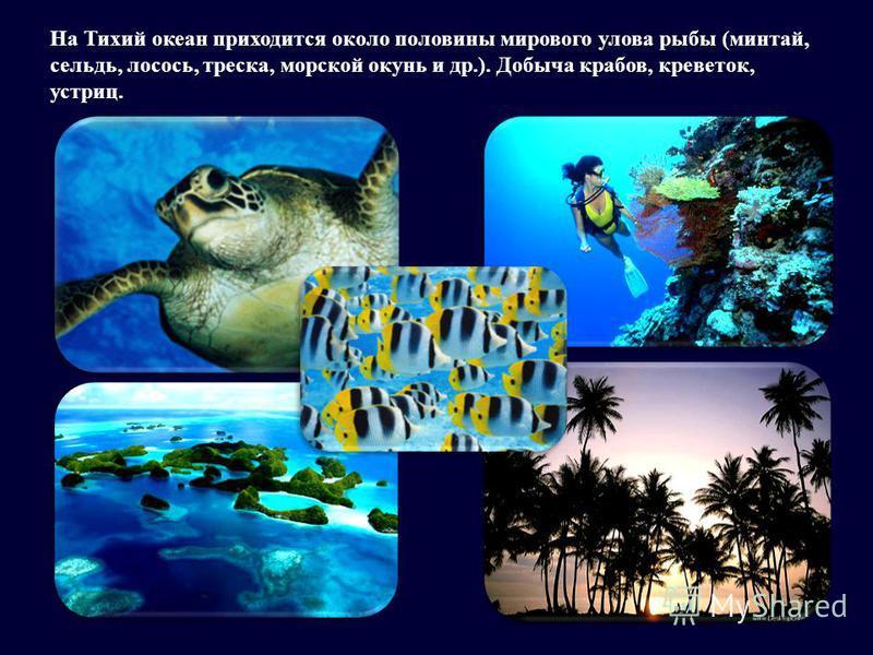 На Тихий океан приходится около половины мирового улова рыбы (минтай, сельдь, лосось, треска, морской окунь и др.). Добыча крабов, креветок, устриц.