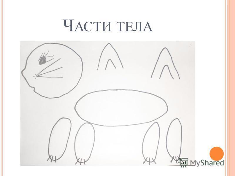 Ч АСТИ ТЕЛА