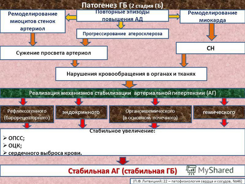 Патогенез ГБ (2 стадия ГБ ) Повторные эпизоды повышения АД Ремоделирование миоцитов стенок артериол Прогрессирование атеросклероза Ремоделирование миокарда Сужение просвета артериол СН Нарушения кровообращения в органах и тканях Реализация механизмов