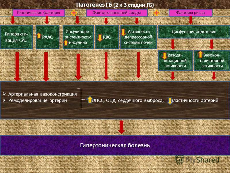 Патогенез ГБ (2 и 3 стадии ГБ) Генетические факторы Факторы внешней среды Факторы риска Гиперакти- вация САС РААС Инсулиноре- зистентность: инсулина ККС Активности депрессорной системы почек Дисфункция эндотелия Вазоди- лятационнй активности Вазокон-