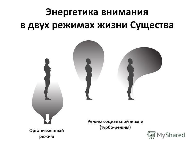 Энергетика внимания в двух режимах жизни Существа Организменный режим Режим социальной жизни (турбо-режим)
