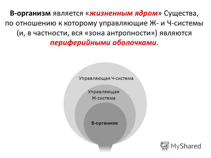 В-организм является «жизненным ядром» Существа, по отношению к которому управляющие Ж- и Ч-системы (и, в частности, вся «зона антропности») являются периферийными оболочками. В-организм Управляющая Ж-система Управляющая Ч-система