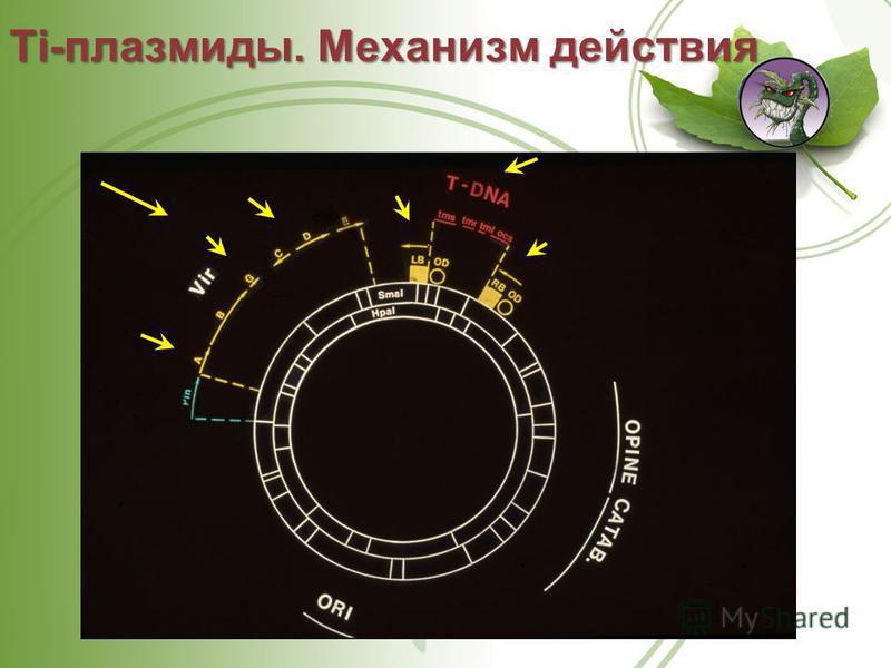 Ti-плазмиды. Механизм действия