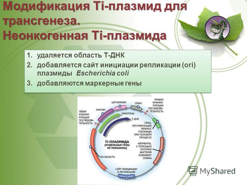 Модификация Ti-плазмид для трансгенеза. Неонкогенная Ti-плазмида 1. удаляется область Т-ДНК 2. добавляется сайт инициации репликации (ori) плазмиды Escherichia coli 3. добавляются маркерные гены 1. удаляется область Т-ДНК 2. добавляется сайт инициаци
