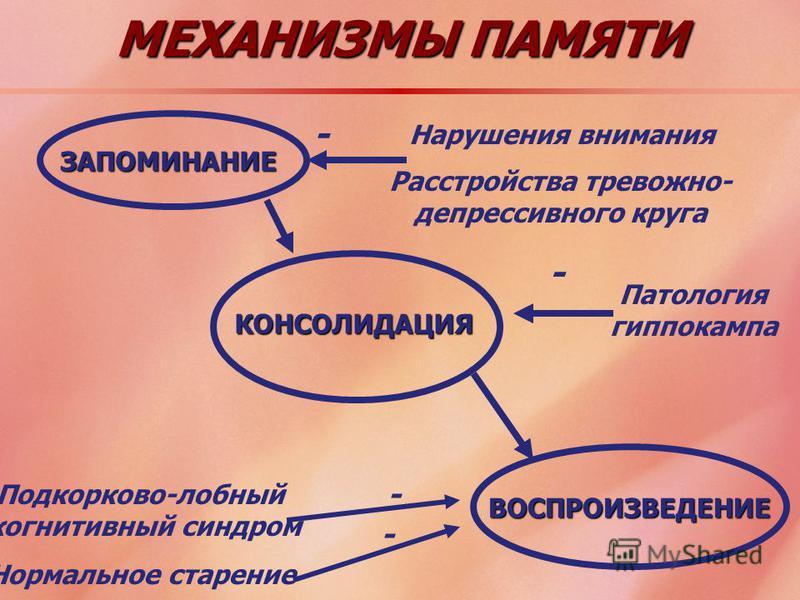 МЕХАНИЗМЫ ПАМЯТИ ЗАПОМИНАНИЕ КОНСОЛИДАЦИЯ ВОСПРОИЗВЕДЕНИЕ Нарушения внимания Расстройства тревожно- депрессивного круга - Подкорково-лобный когнитивный синдром Нормальное старение - - Патология гиппокампа -