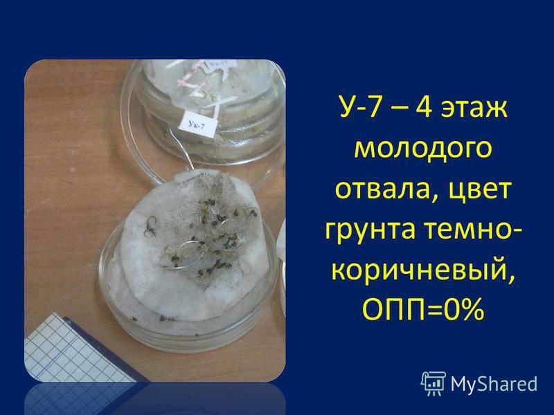 У-7 – 4 этаж молодого отвала, цвет грунта темно- коричневый, ОПП=0%
