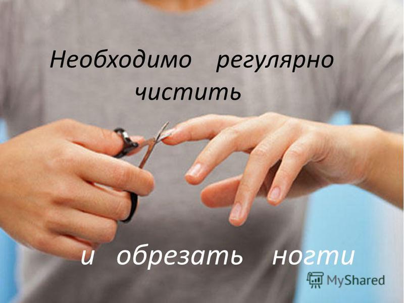 Необходимо регулярно чистить и обрезать ногти