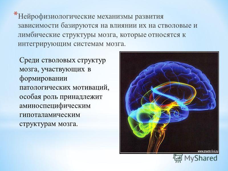 * Нейрофизиологические механизмы развития зависимости базируются на влиянии их на стволовые и лимбические структуры мозга, которые относятся к интегрирующим системам мозга. Среди стволовых структур мозга, участвующих в формировании патологических мот