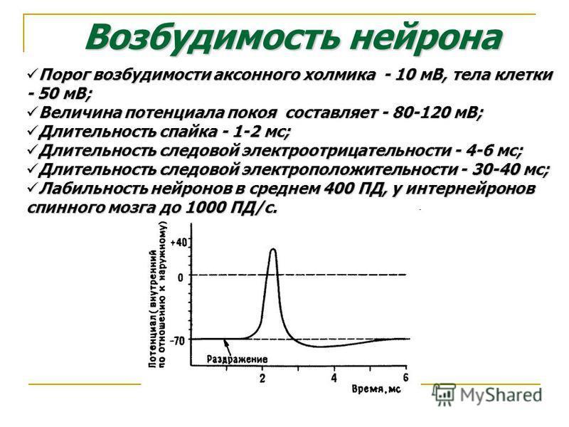 Возбудимость нейрона Порог возбудимости аксонного холмика - 10 мВ, тела клетки - 50 мВ; Порог возбудимости аксонного холмика - 10 мВ, тела клетки - 50 мВ; Величина потенциала покоя составляет - 80-120 мВ; Величина потенциала покоя составляет - 80-120