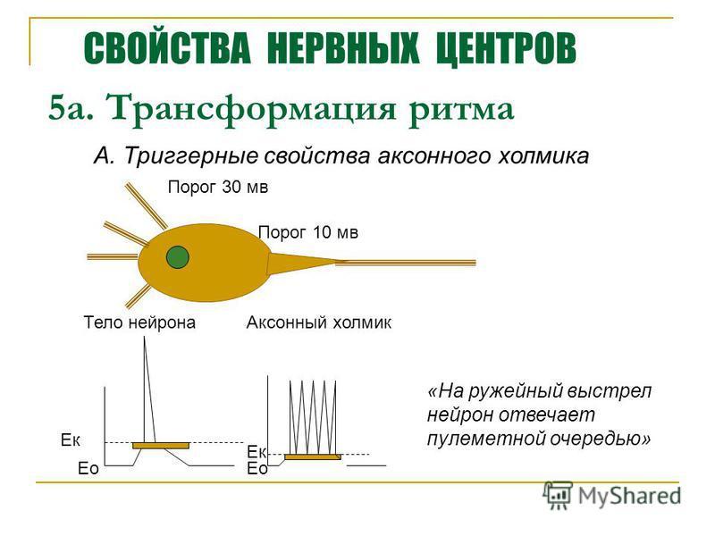 5 а. Трансформация ритма А. Триггерные свойства аксонного холмика Ек Ео Тело нейрона Аксонный холмик Порог 30 мв Порог 10 мв «На ружейный выстрел нейрон отвечает пулеметной очередью» СВОЙСТВА НЕРВНЫХ ЦЕНТРОВ