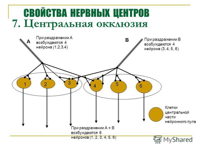 7. Центральная окклюзия 12 3 4 5 6 А В При раздражении А возбуждаются 4 нейрона (1,2,3,4) При раздражении В возбуждаются 4 нейрона (3, 4, 5, 6) При раздражении А + В возбуждаются 6 нейронов (1, 2, 3, 4, 5, 6) Клетки центральной части нейронного пула