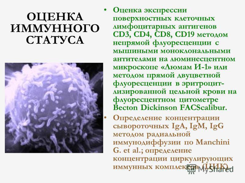 ОЦЕНКА ИММУННОГО СТАТУСА Оценка экспрессии поверхностных клеточных лимфоцитарных антигенов CD3, CD4, CD8, CD19 методом непрямой флуоресценции с мышиными моноклональными антителами на люминесцентном микроскопе «Люмам И-1» или методом прямой двуцветной