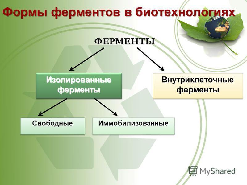 ФЕРМЕНТЫ Изолированные ферменты Свободные Свободные ИммобилизованныеИммобилизованные Внутриклеточные ферменты Формы ферментов в биотехнологиях