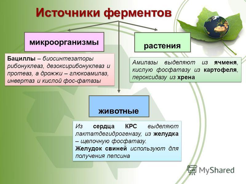 микроорганизмы Источники ферментов Бациллы – био синтезаторы рибонуклеаз, дезоксирибонуклеаз и протеаз, а дрожжи – глюкоамилаз, инвертаз и кислой фос-фатазы растения Амилазы выделяют из ячменя, кислую фосфатазу из картофеля, пероксидазу из хрена живо