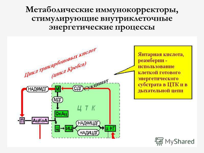 Метаболические иммунокорректоры, стимулирующие внутриклеточные энергетические процессы
