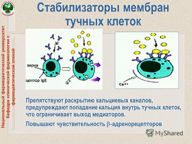 Национальный фармацевтический университет Кафедра клинической фармакологии с фармацевтической опекой Стабилизаторы мембран тучных клеток Препятствуют раскрытию кальциевых каналов, предупреждают попадание кальция внутрь тучных клеток, что ограничивает