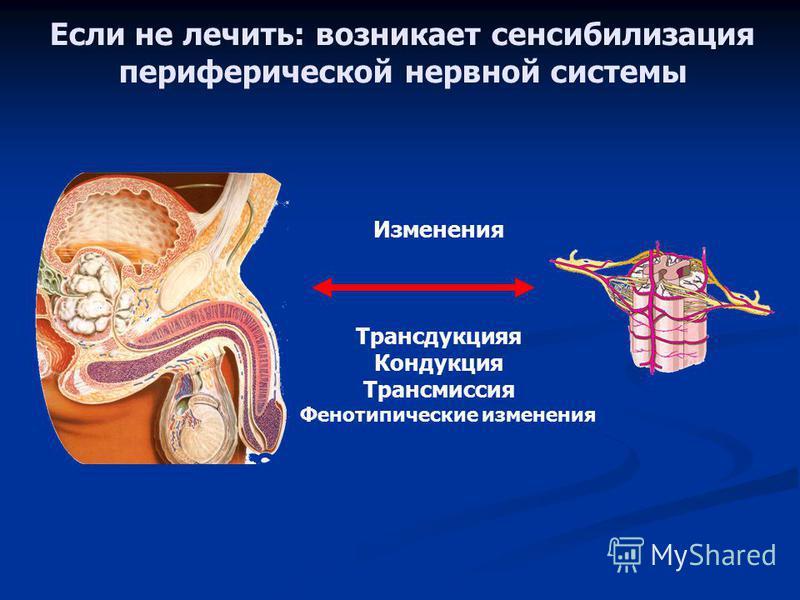 С чего начать обследование предстательной железы