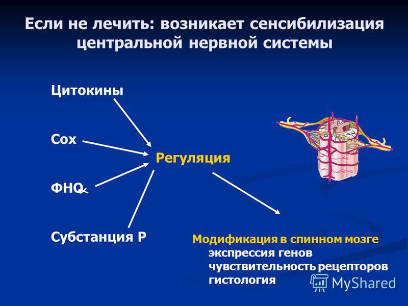 Если не лечить: возникает сенсибилизация центральной нервной системы Цитокины Cox ФНО Субстанция Р Регуляция Модификация в спинном мозге экспрессия генов чувствительность рецепторов гистология