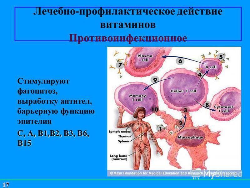 17 Лечебно-профилактическое действие витаминов Противоинфекционное Стимулируют фагоцитоз, выработку антител, барьерную функцию эпителия С, А, В1,В2, В3, В6, В15
