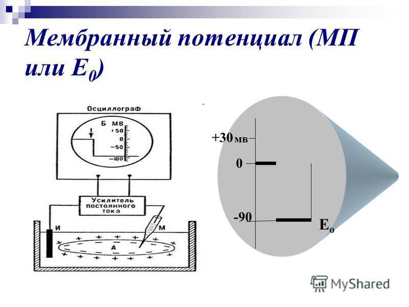 Мембранный потенциал (МП или Е 0 ) -90 +30 мв Ео Ео 0