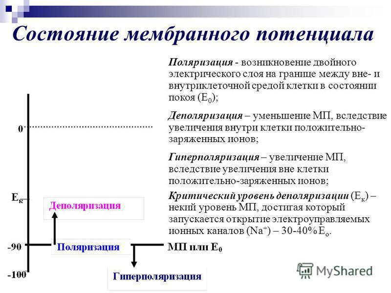 Состояние мембранного потенциала Ек Ек Поляризация - возникновение двойного электрического слоя на границе между вне- и внутриклеточной средой клетки в состоянии покоя (Е 0 ); Деполяризация – уменьшение МП, вследствие увеличения внутри клетки положит