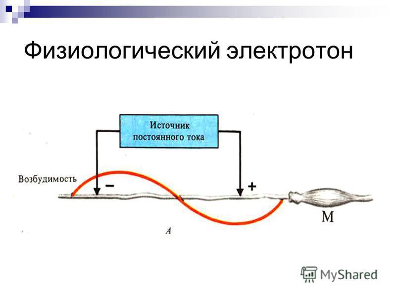 Физиологический электротон