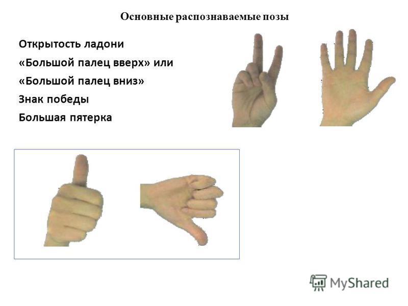 Основные распознаваемые позы Открытость ладони «Большой палец вверх» или «Большой палец вниз» Знак победы Большая пятерка