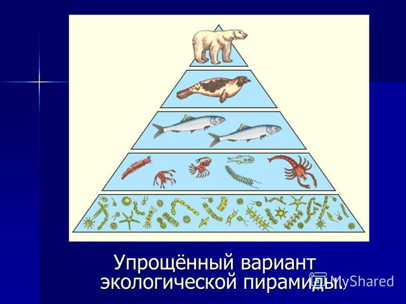 Упрощённый вариант экологической пирамиды.