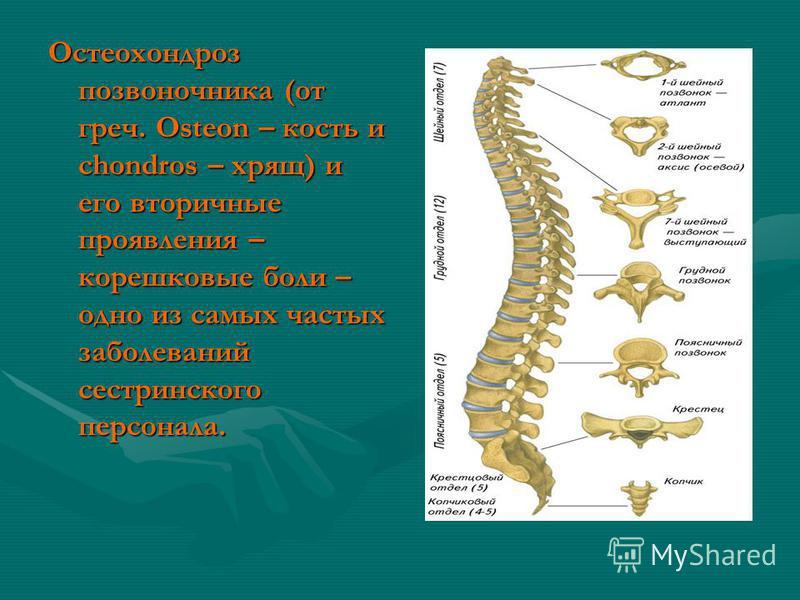 Остеохондроз позвоночника (от греч. Osteon – кость и chondros – хрящ) и его вторичные проявления – корешковые боли – одно из самых частых заболеваний сестринского персонала.
