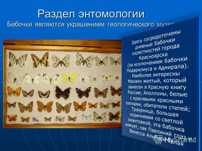 Раздел энтомологии Бабочки являются украшением геологического музея