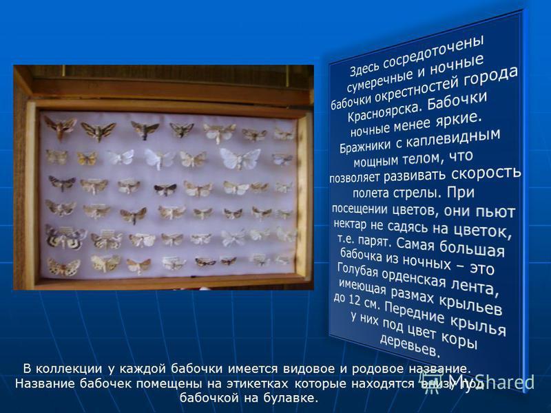 В коллекции у каждой бабочки имеется видовое и родовое название. Название бабочек помещены на этикетках которые находятся внизу под бабочкой на булавке.